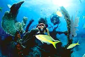 Destin Florida Scuba Diving And Destin Florida Snorkeling